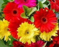 花束五颜六色的花大丁草 免版税库存图片