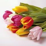 花束五颜六色的花新鲜的春天郁金香 库存图片