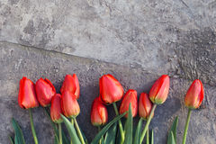 花束五颜六色的郁金香 免版税库存图片