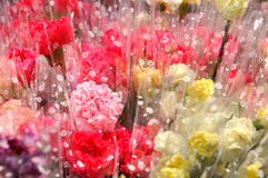 花束做红色玫瑰染黄 图库摄影