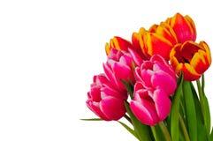 花束复活节木春天的郁金香 免版税库存图片