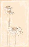花束大丁草样式葡萄酒 免版税库存照片