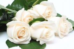 花束奶油色玫瑰 免版税库存图片