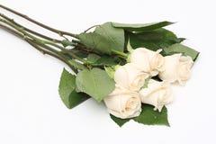 花束奶油色玫瑰 库存照片