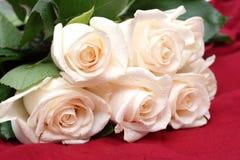 花束奶油色玫瑰 图库摄影