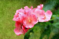 花束小的桃红色玫瑰 库存图片