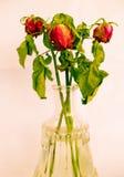 花束干玫瑰 免版税库存照片