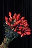 花束开花例证向量 库存照片