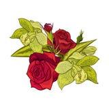 花束开花向量 库存照片