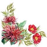 花束开花牡丹,大丽花,角落,水彩,例证 皇族释放例证