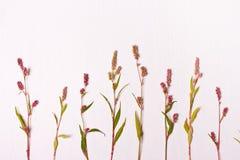 花束弓形象花纹花样无缝小 平的位置 库存照片