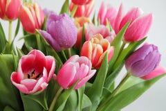 花束彩色插图模拟郁金香向量水 图库摄影