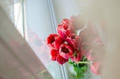 花束彩色插图模拟郁金香向量水 库存图片