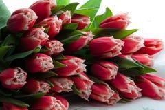 花束彩色插图模拟郁金香向量水 免版税图库摄影