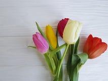 花束新鲜在一张白色木背景桌上的郁金香季节性日期行军 免版税库存照片