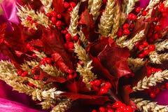 花束构成 有麦子耳朵的红槭叶子 库存照片
