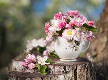 花束桃红色开花的苹果树 库存图片