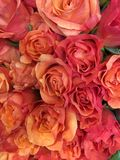 花束桔子玫瑰 免版税库存照片