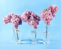 花束淡紫色紫罗兰 免版税库存图片