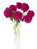 花束牡丹花瓶 图库摄影