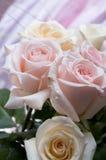 花束玫瑰 库存图片