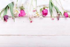 花束第一朵春天花、桃红色、紫色郁金香、黄水仙和雏菊在白色木背景 库存图片