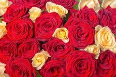 花束红色和黄色玫瑰流程美好的欢乐背景  免版税库存图片