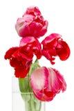 花束红色郁金香 库存照片