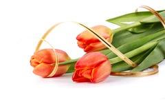 花束红色郁金香 库存图片