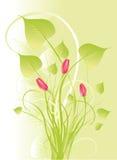 花束绿色招标 库存照片