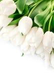 花束绿色留给郁金香白色 免版税图库摄影