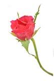 花束能下落叶子红色玫瑰看到水您 库存照片