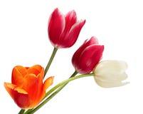 花束花卉花例证向量 免版税库存照片