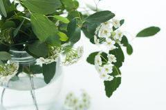 花束花瓶白色 免版税图库摄影