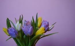 花束花郁金香桃红色背景春天multicolors 库存图片