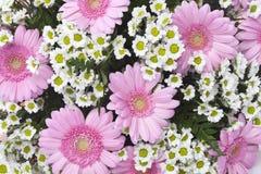 花束花 图库摄影
