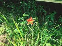 花束装饰花卉例证玫瑰向量 库存照片
