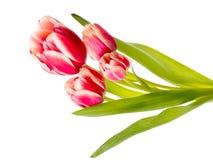 花束郁金香的明亮的花 免版税库存照片