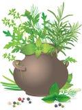 花束陶瓷新鲜的草本罐 向量例证
