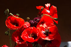 花束鸦片 世界记忆天的红色花标志 免版税图库摄影