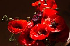 花束鸦片 世界记忆天的红色花标志 库存照片