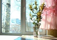 花束,含羞草,窗口,太阳,桃红色,鞋带,一幅帷幕,或者有玩具蝴蝶的,光,假日, 3月8日, 免版税库存图片