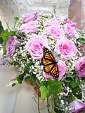 花束蝴蝶 免版税图库摄影