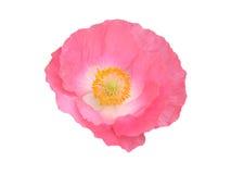 花查出的粉红色 免版税图库摄影