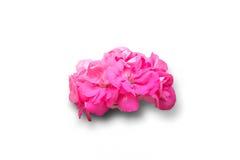 花查出的粉红色 库存图片