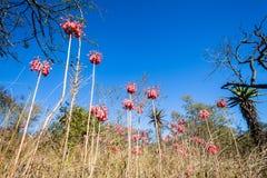 花树动物区系草原冬天蓝色地形 免版税库存照片