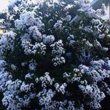 花树 库存照片