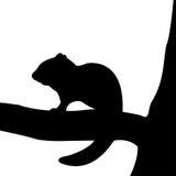 花栗鼠剪影在树的。 免版税库存照片
