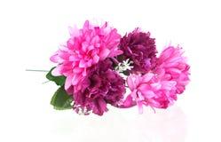 花桃红色花束  库存图片