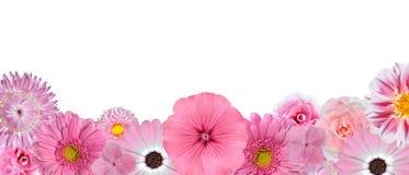 花桃红色行选择多种白色 免版税库存照片